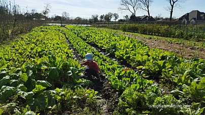 Picture of child playing at local organic farm